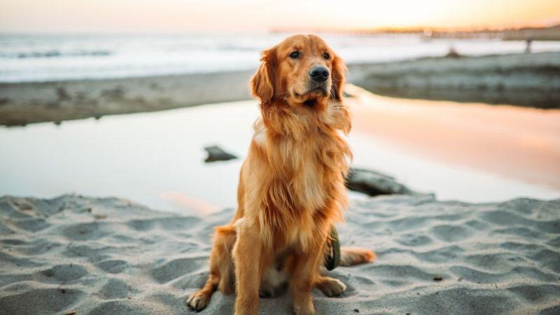 Tiendas de mascotas baratas en España